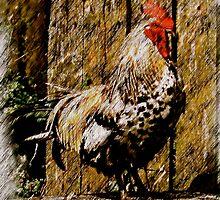 Fine Irish Rooster by bhutch7