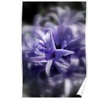 Mauve Hyacinth Poster
