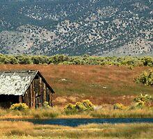 The Cabin in the Foothills by Ann  Van Breemen