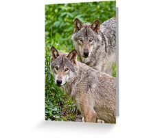 Timberwolf Pair Greeting Card
