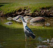 Searchin For Fish by R&PChristianDesign &Photography