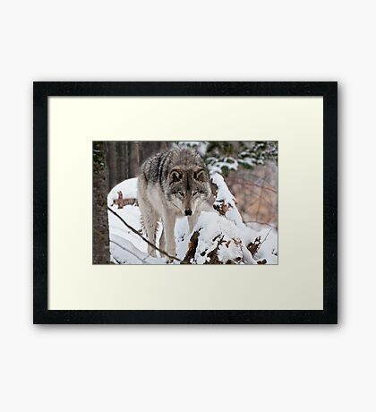 Patrolling  Framed Print