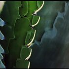 awesome agave by Tess Buckler
