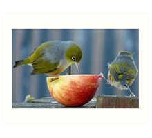 Holding the Apple Up! - Wax Eye NZ - Southland Art Print