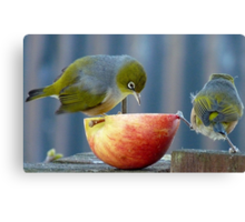 Holding the Apple Up! - Wax Eye NZ - Southland Canvas Print
