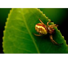 Spider without web Photographic Print