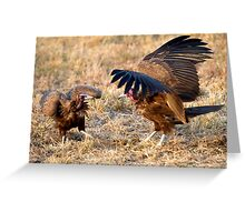 Hooded Vulture Dispute Greeting Card