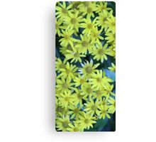 Yellow Blossoms Collection Canvas Print