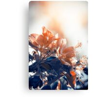 Blossoming Tree Canvas Print