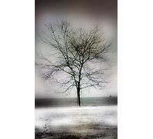 winter shore too Photographic Print