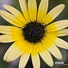 Spring in Australia by Elena Martinello