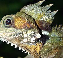 boyds forest dragon by Brian Puckey