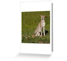 Cheetah, Masai Mara, Kenya Greeting Card