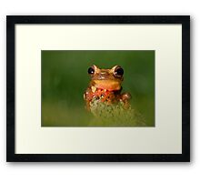 The Clown frog Framed Print