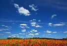 Poppies and Clouds by Martins Blumbergs