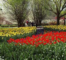 Tulip Tops Gardens.  --- Australia. by shortshooter-Al