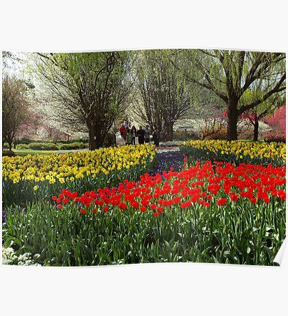 Tulip Tops Gardens.  --- Australia. Poster