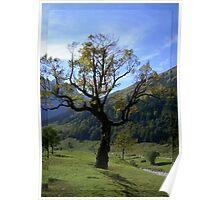 Maple Solitude Poster
