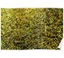 Dry Moss Poster