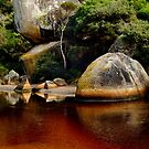 Tea Tree Stained Waters of Tidal River by Joe Mortelliti