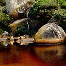Tea Tree Stained Waters of Tidal River by Joe Mortelliti