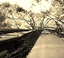 Dead Tracks 2........... Eltham NSW by BK Photography