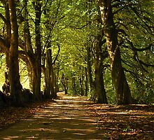 Chestnut Avenue by Paul Gibbons
