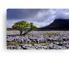 Ingleborough from White Scars Canvas Print