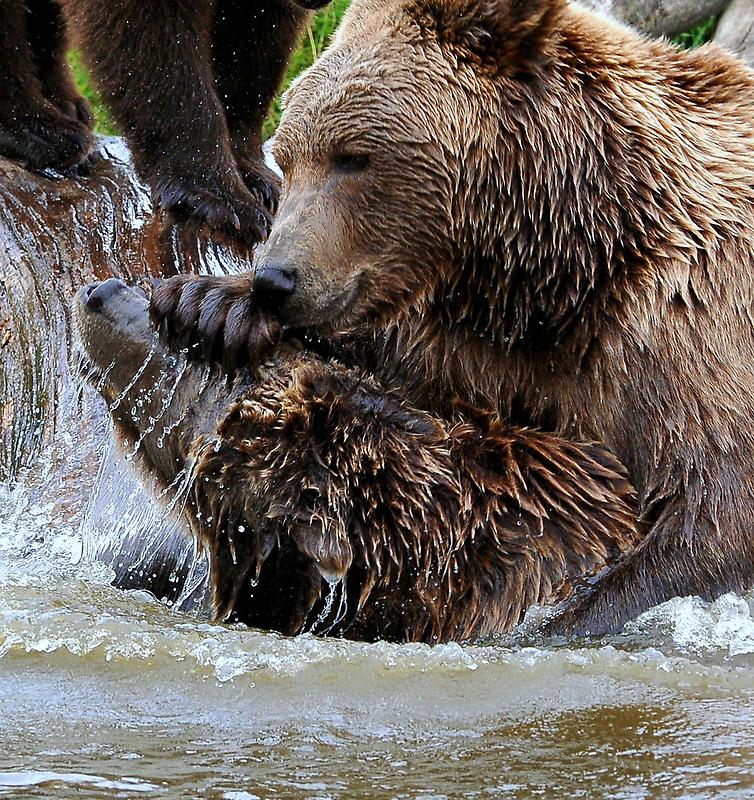 Bear games by Alan Mattison