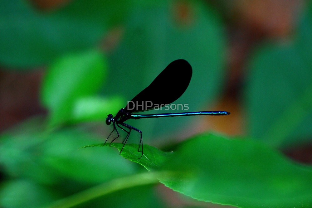 Damselfly by DHParsons