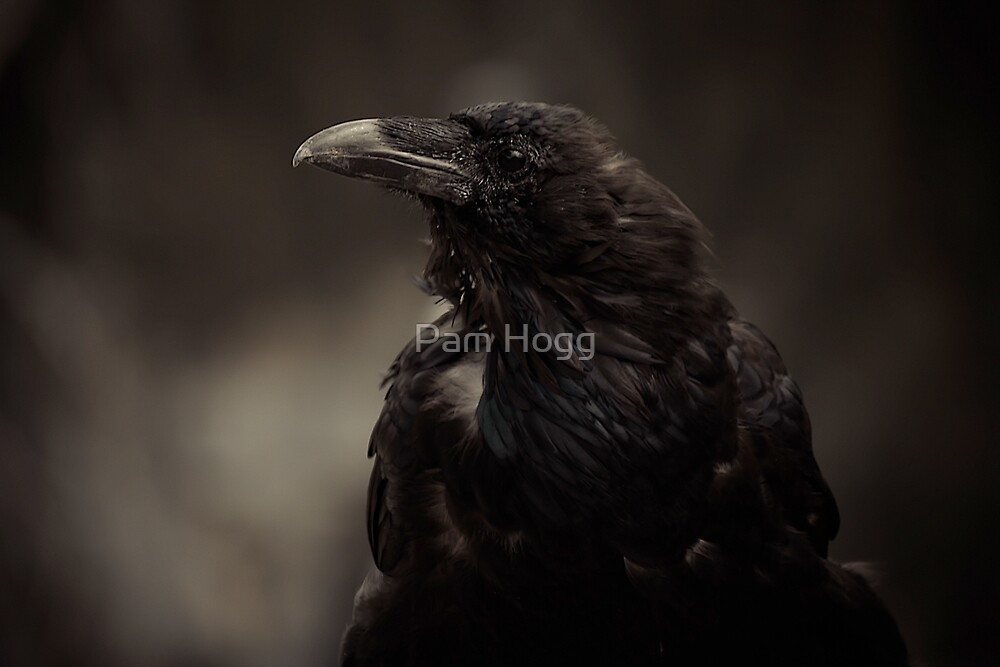 The Raven by Pam Hogg