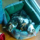 "Mickey and Moire - Catnapping 6/10 by Edmond J. [""Skip""] O'Neill"
