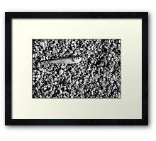Porto Pollo - Silver fish. Framed Print