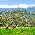 The contrasting environment we know as Australia by Mark Elshout