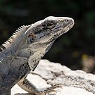Iguana by Pam Hogg