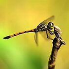 Dragonfly on Perch IV by Amran Noordin