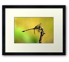 Dragonfly on Perch IV Framed Print