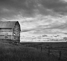 Old Milk River Barn by Kerri Gallagher