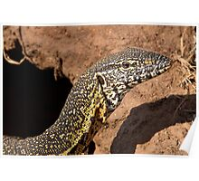 Nile Water Monitor Close Up Poster