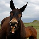 Yer Crackin' Me Up!  Montana Mule Photo by Donna Ridgway