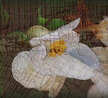 (calendar cover) white begonia by vigor