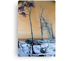 Dried trees Metal Print