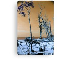 Dried trees Canvas Print