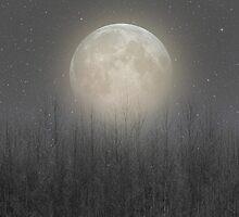 The Moon Shines Bright (Birch Moon II) by soaringanchor