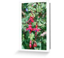 Brodsworth Fuchsia Greeting Card