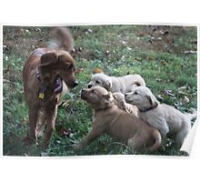 Mothers Joy Playing With Her Pups- 10 Poster