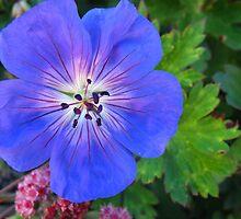 Blue Dazzler by MarianBendeth