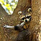 Portrait of a Raccoon by Karen Peron