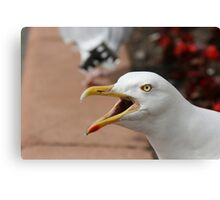 Squawking Seagull Canvas Print
