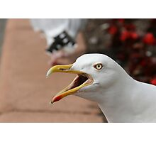 Squawking Seagull Photographic Print